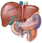 Čajevi za jetru