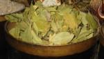 Lovorov list kao lek protiv kašlja, akni,gihta – čaj za kosu i lice