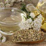 Čaj od hajdučke trave lekovitost, upotreba za jajnike, plodnost u trudnoći…
