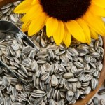 Suncokretove semenke nutritivna vrednost