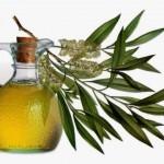 Eterično ulje čajevca upotreba za gljivice, akne, bradavice, kosu…