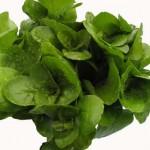 Potočarka salata za bolje zdravlje