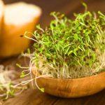 Zanimljivi recepti sa zelenim klicama