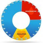 Plodni dani i ovulacija simptomi i faze