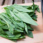 Jela od sremuša recepti – salata, čorba…
