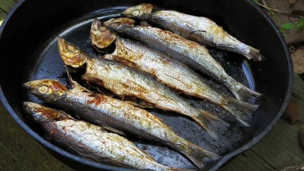 haringa riba zdravlje
